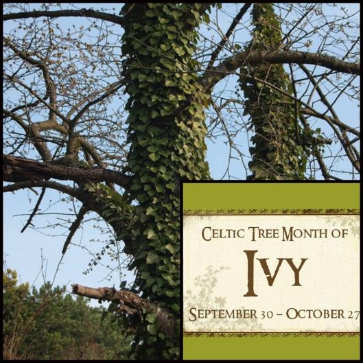 ivy_celtic_tree_month_collage.jpg